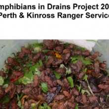 Amphibians in Drains Report 2011