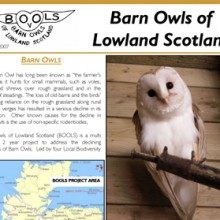 Barn Owls of Lowland Scotland Newsletter 1