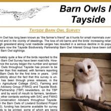 Barn Owls In Tayside Newletter 1