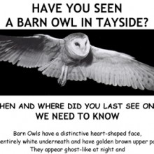 Have you seen a Barn Owl Poster