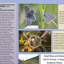 Small Blue information Sheet