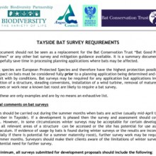 Bat Survey Requirements