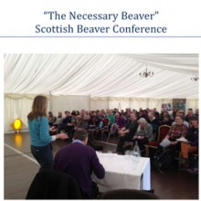 The Necessary Beaver