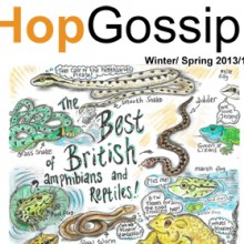 Hop Gossip Winter/Spring 13/14