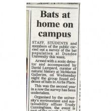 Bats At Home