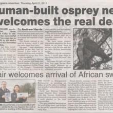 Human-built Osprey Nest