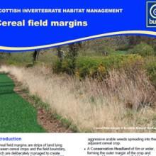 Cereal Field Margins