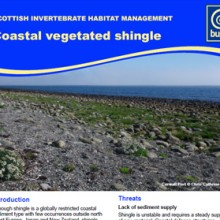 Coastal Vegetated Shingle