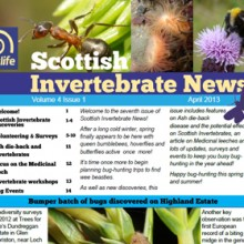 Scottish Invertebrate News April 2013