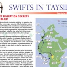 Swifts In Tayside – 2