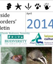 Tayside Recorders Bulletin April 2014