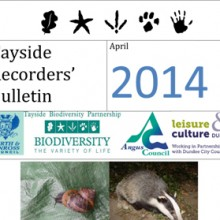Tayside Recorders Bulletin April 2014