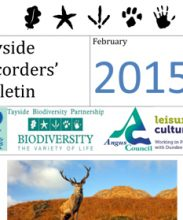 Tayside Recorders' Bulletin Feb 2015