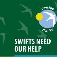 New Tayside Swifts Leaflet