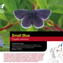 Small Blue Factsheet 2017