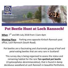 Ten-spot Pot Beetle Hunt