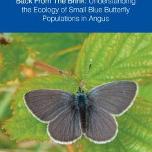 Small Blue Butterfly Populations in Angus