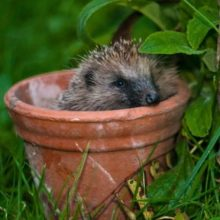 Mind the Gap Hedgehog Project – The Times